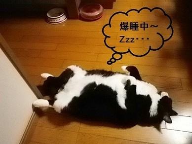 003 爆睡中~ペコちゃん hoshi 再.jpg