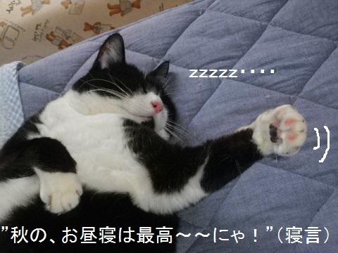 003秋のお昼寝・・・.jpg