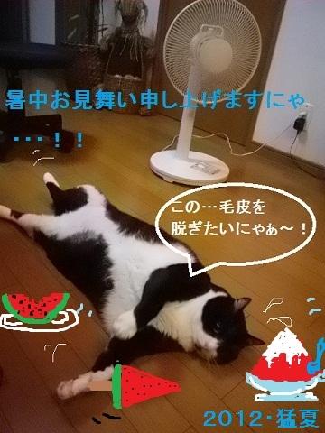 ✩暑中お見舞い申し上げます!!✩.jpg