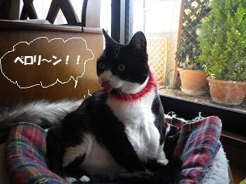 ぺロリ~ン!!mm!.jpg