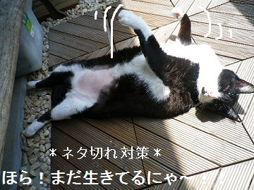 ネタ切れ~対策!!(='x'=)??.jpg