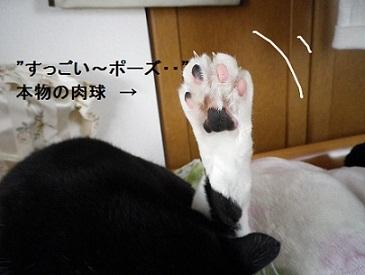ペコちゃんの肉球!!.jpg