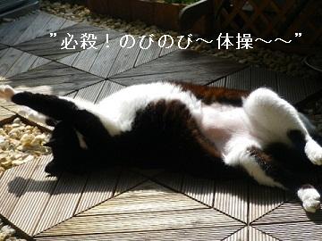 必殺!のびのび~~体操!.jpg