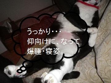爆睡&寝姿・・・.jpg