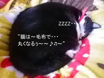 猫は毛布で丸くなるぅ~~♬.jpg